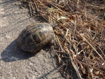 Gerettete Schildkröte
