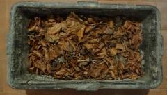 Überwinterungsbehälter gefüllt mit Buchenlaub